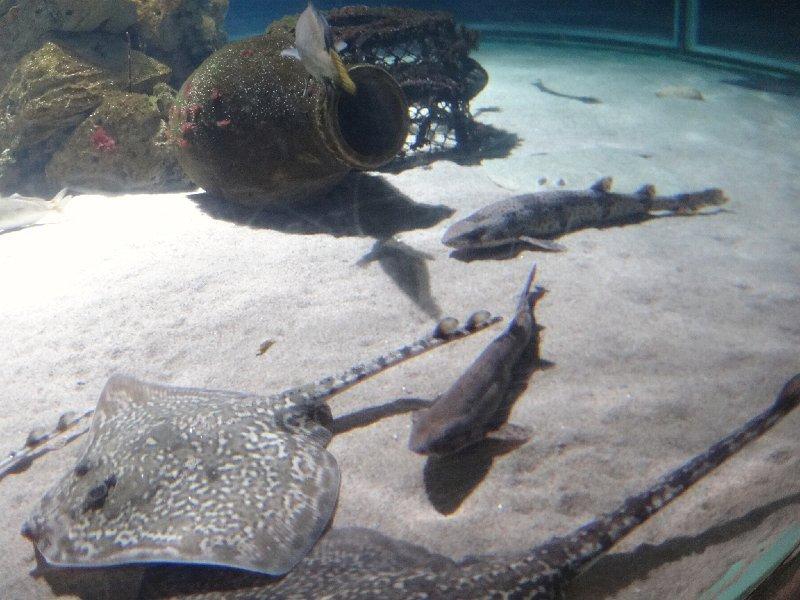 2011-11-20-jrj-sea-life-konstanz-043