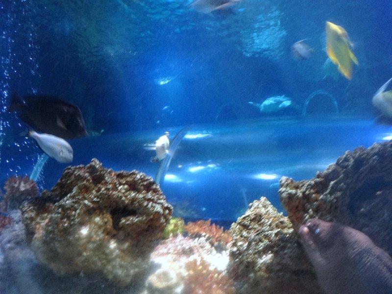 2011-11-20-jrj-sea-life-konstanz-048
