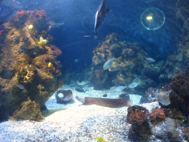2011-11-20-jrj-sea-life-konstanz-049