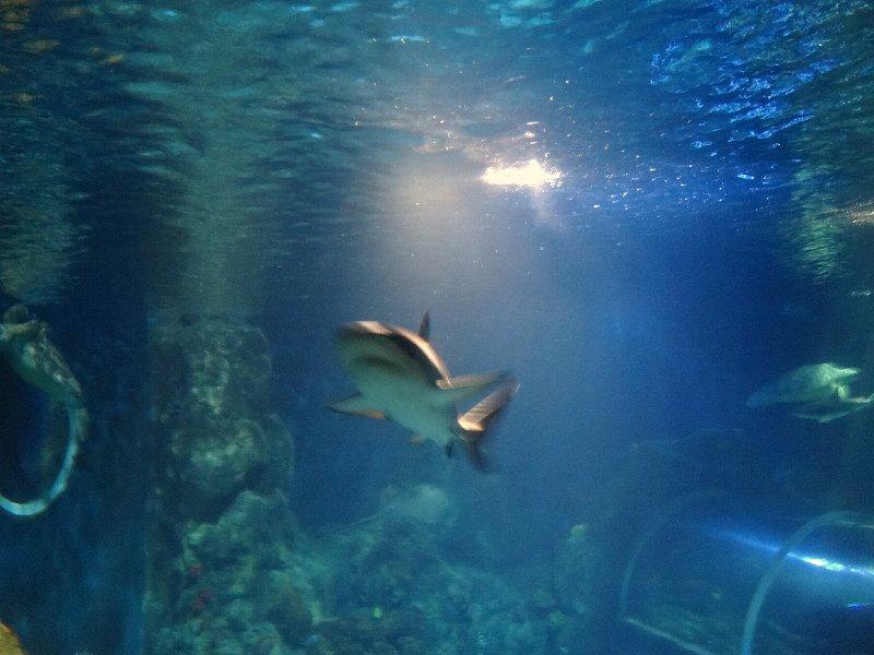2011-11-20-jrj-sea-life-konstanz-053