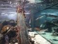 2011-11-20-jrj-sea-life-konstanz-037