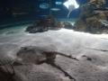 2011-11-20-jrj-sea-life-konstanz-040