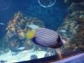 2011-11-20-jrj-sea-life-konstanz-050