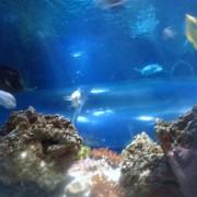 2011-11-20-jrj-sea-life-konstanz-65