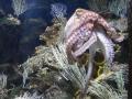 2011-11-20-jrj-sea-life-konstanz-039